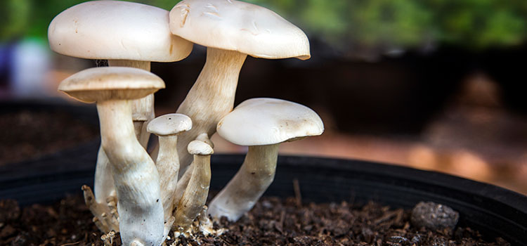 """7 Things You Need to Know If You Wonder, """"How Are Mushrooms Grown"""" 
