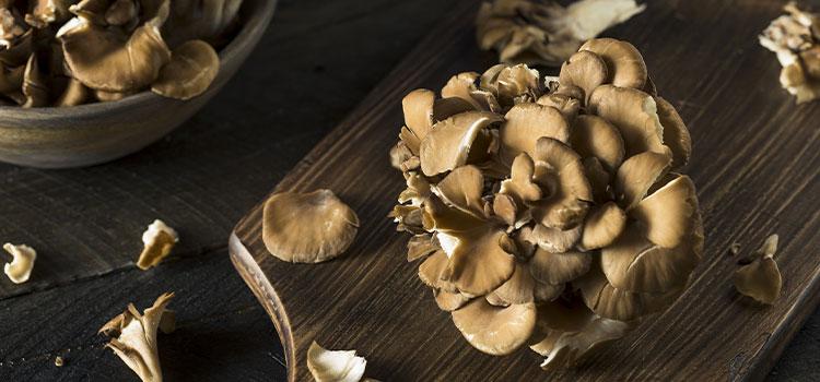 8 Maitake Mushroom Benefits | ultimatemedicinalmushrooms.com