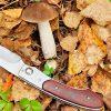 4 Simple Steps to Using a Mushroom Knife | ultimatemedicinalmushrooms.com