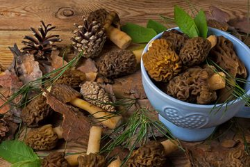 8 Facts to Help You Learn How to Store Morel Mushrooms | ultimatemedicinalmushrooms.com