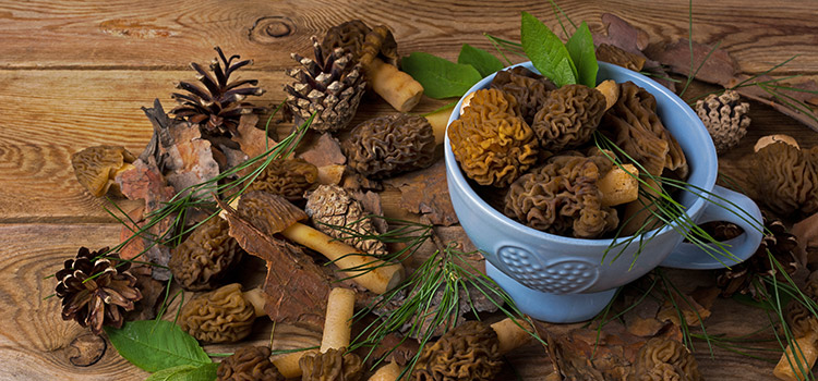 8 Facts to Help You Learn How to Store Morel Mushrooms   ultimatemedicinalmushrooms.com