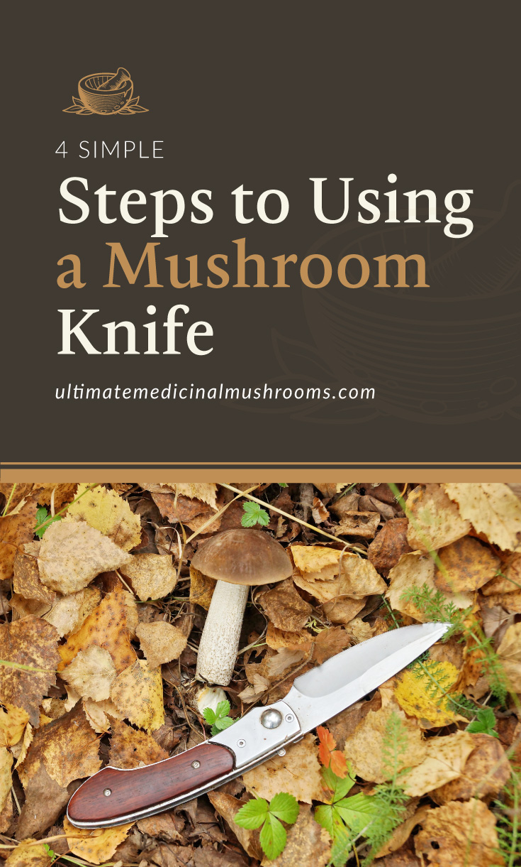 """Text area which says """"4 Simple Steps to Using a Mushroom Knife , ultimatemedicinalmushrooms.com"""" followed by a photo of a mushroom knife and a porcini mushroom laid on top of dried leaves"""