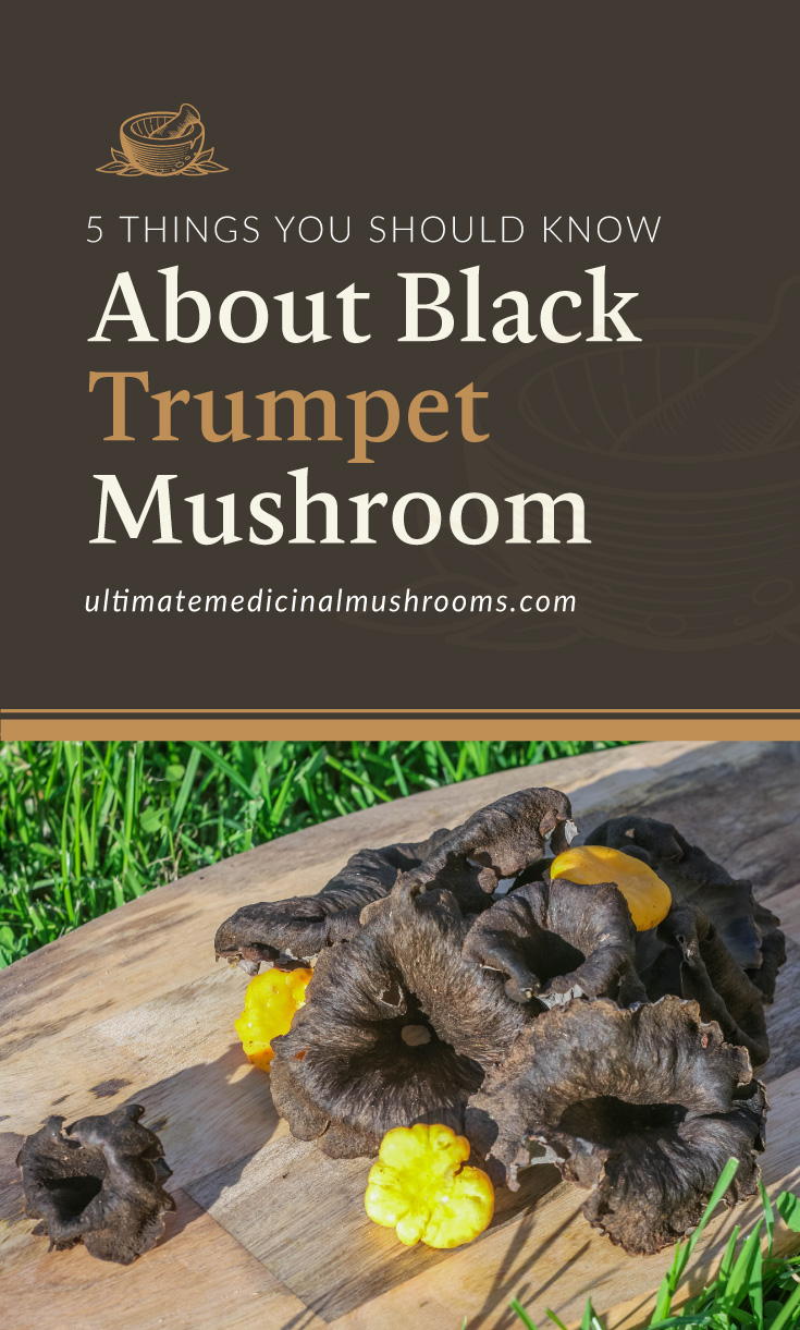 """Text area which says """"5 Things You Should Know About Black Trumpet Mushroom, ultimatemedicinalmushrooms.com"""" followed by a photo of a black trumpet mushrooms laid on a wooden table"""