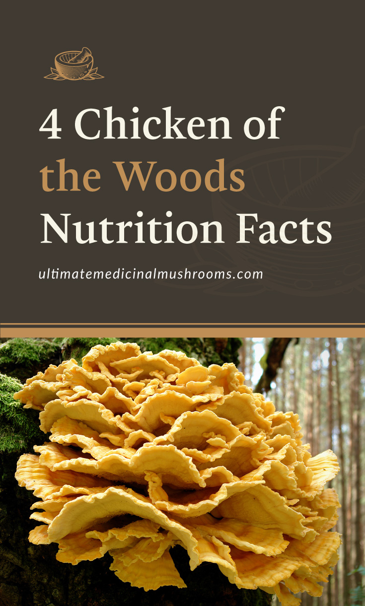 """Text area which says """"4 Chicken of the Woods Nutrition Facts , ultimatemedicinalmushrooms.com"""" followed by a photo of a cluster of chicken of the woods mushrooms"""