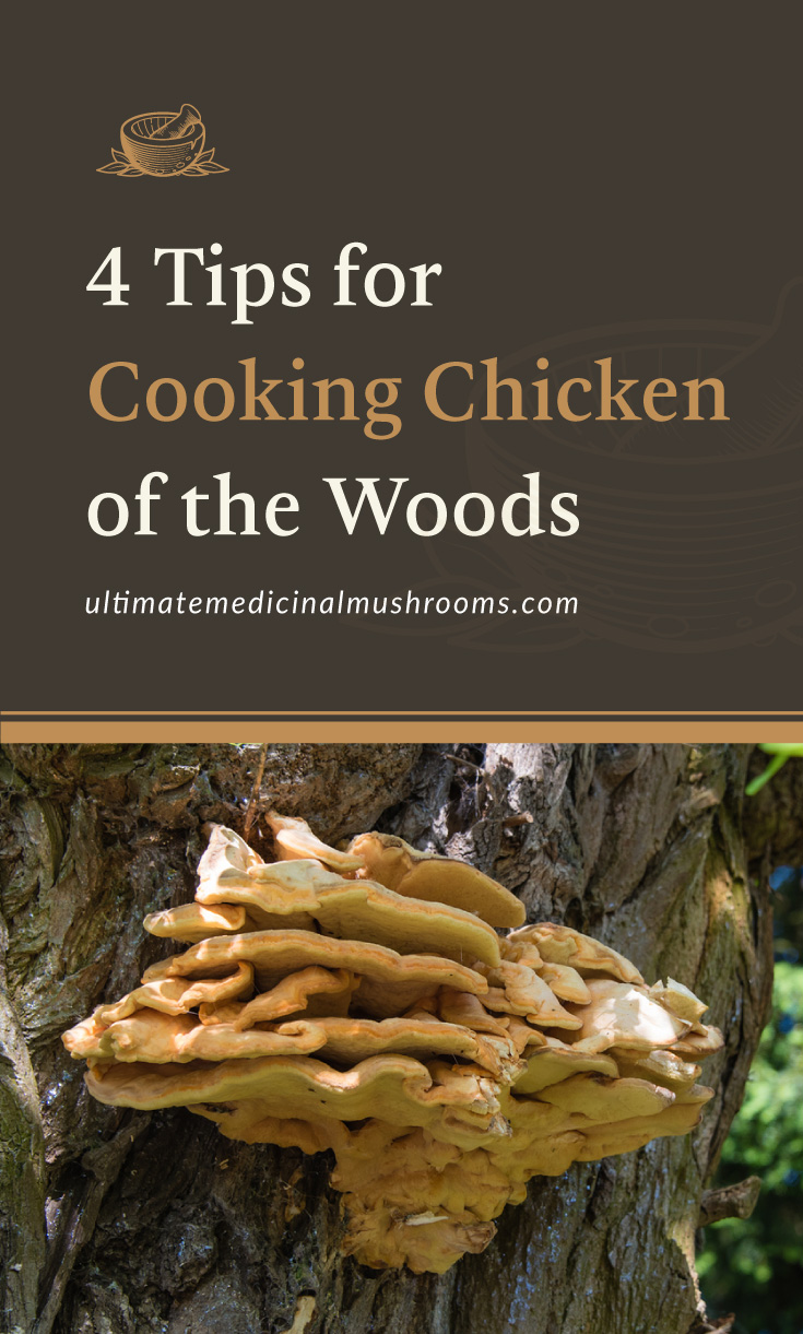 """Text area which says """"4 Tips for Cooking Chicken of the Woods, ultimatemedicinalmushrooms.com"""" followed by a photo of a cluster of chicken of the woods mushrooms on a tree"""