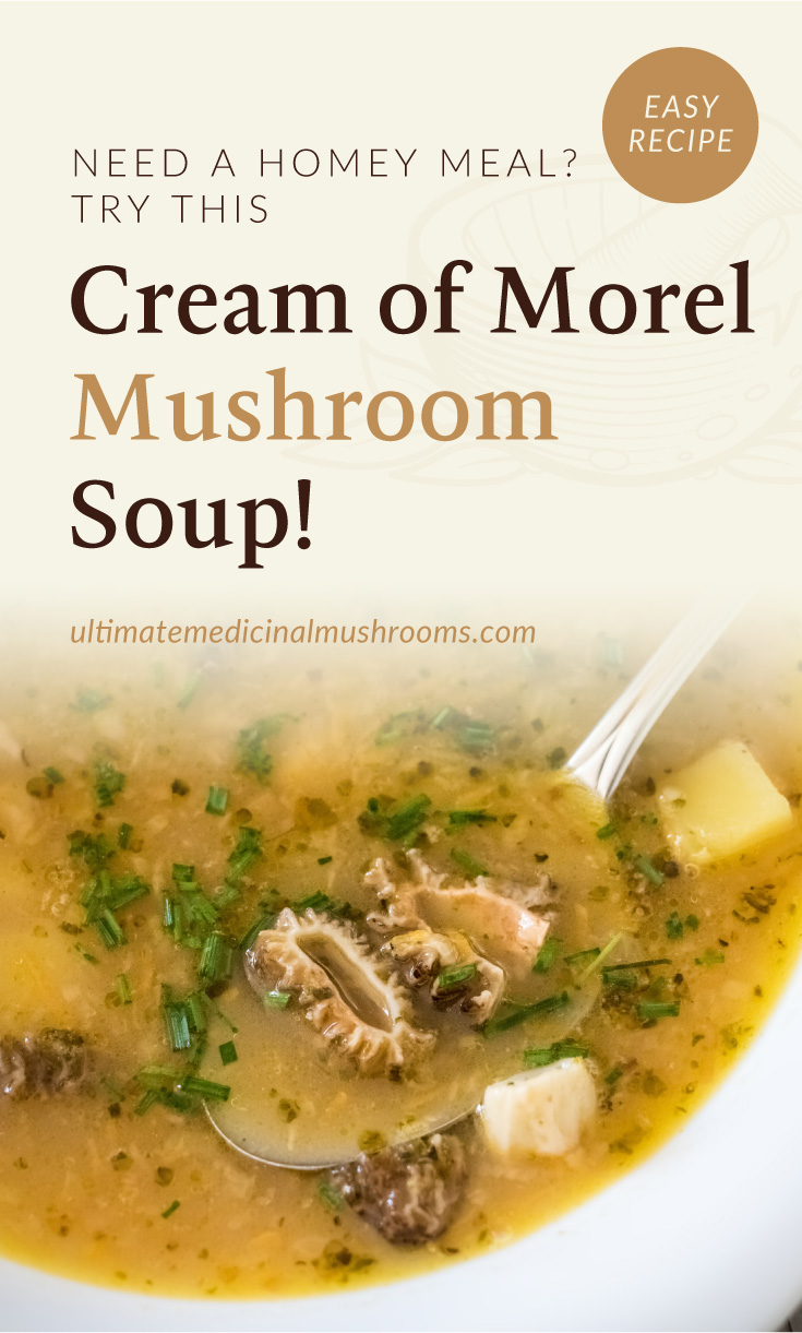 """Text area which says """"Need A Homemade Meal? Try This Cream of Morel Mushroom Soup!, ultimatemedicinalmushrooms.com"""" followed by a close-up view of a cream of morel mushroom soup with a spoon"""