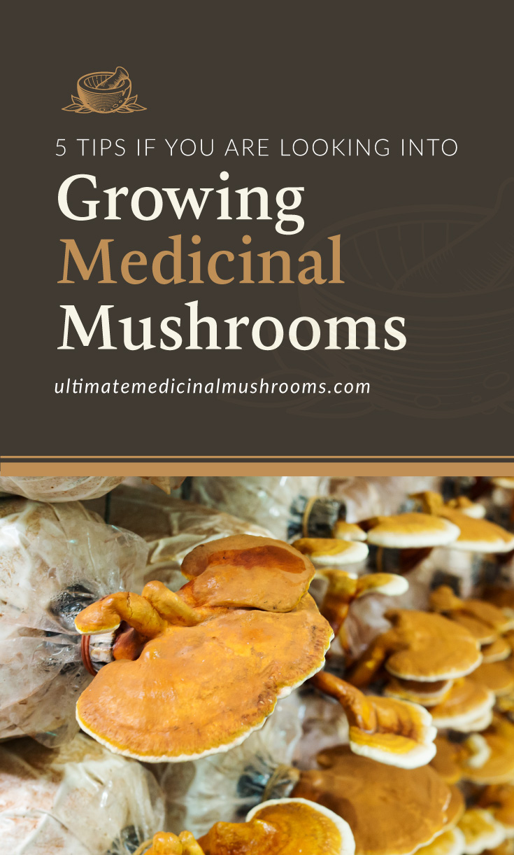 """Text area which says """"5 Tips If You Are Looking Into Growing Medicinal Mushrooms, ultimatemedicinalmushrooms.com"""" followed by a photo of reishi mushrooms growing from a mushroom farm"""