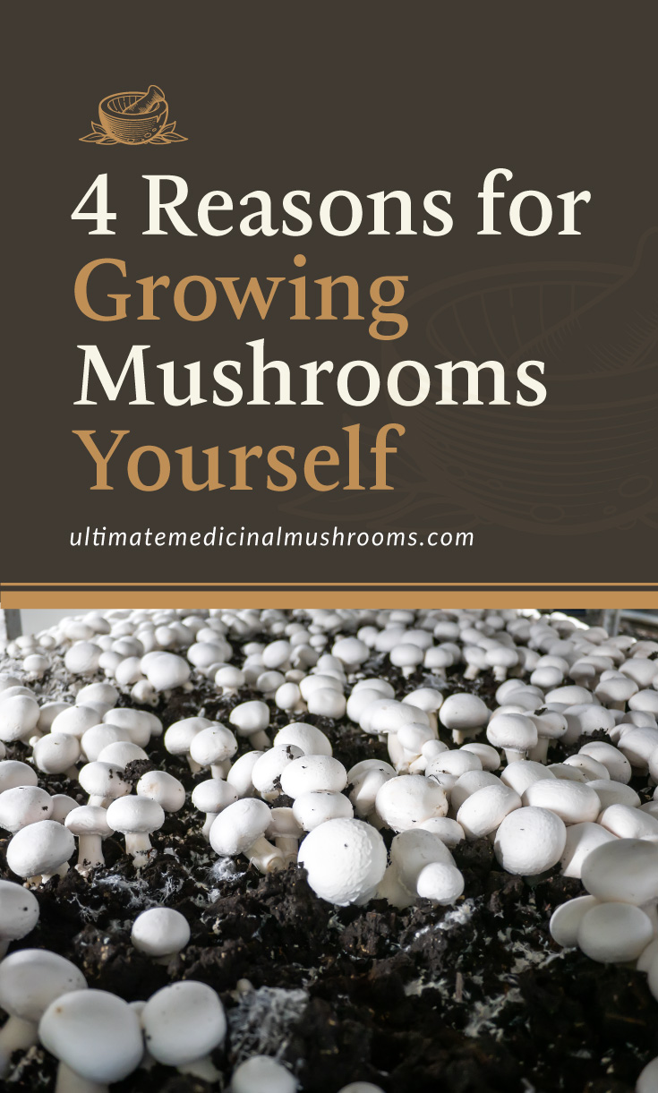 """Text area which says """"4 Reasons for Growing Mushrooms Yourself , ultimatemedicinalmushrooms.com"""" followed by a photo of white mushrooms growing on a farm soil"""