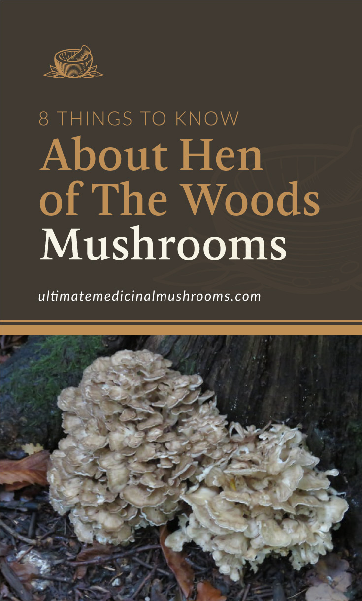 """Text area which says """"8 Things To Know About Hen of The Woods Mushrooms, ultimatemedicinalmushrooms.com"""" followed by a photo of mushroom on tree"""