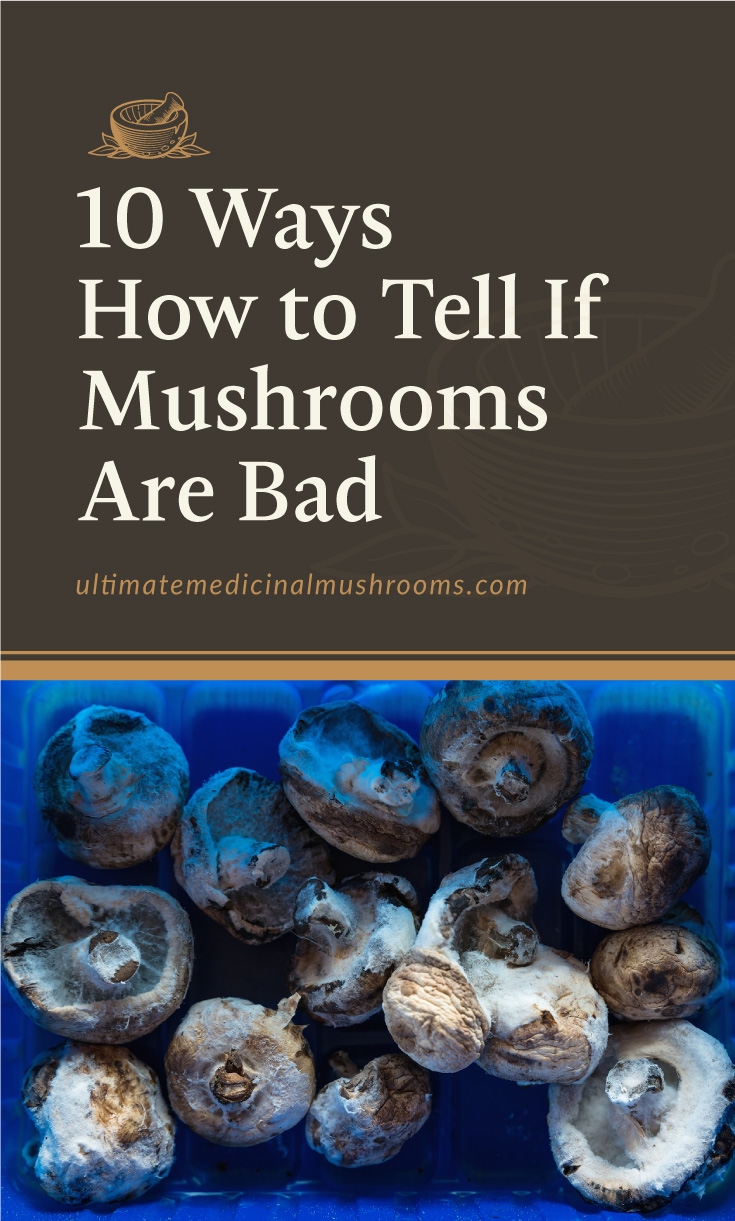 """Text area which says """"10 Ways How to Tell if Mushrooms Are Bad , ultimatemedicinalmushrooms.com"""" followed by a photo of moldy white mushrooms in a blue plastic basket"""