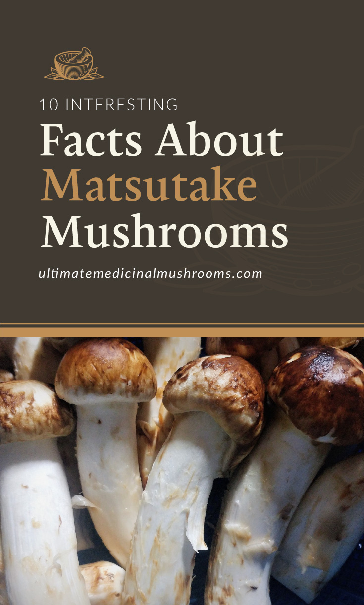 """Text area which says """"10 Interesting Facts About Matsutake Mushrooms , ultimatemedicinalmushrooms.com"""" followed by a close-up photo of a bunch of matsutake mushrooms"""