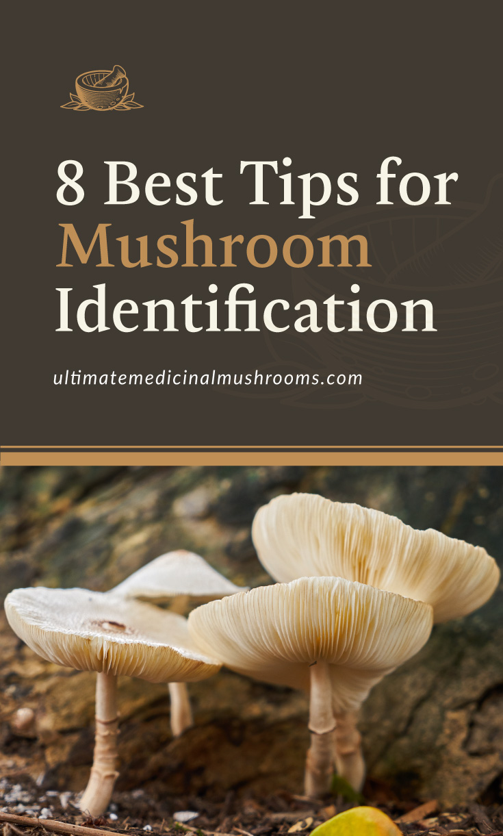 """Text area which says """"8 Best Tips for Mushroom Identification , ultimatemedicinalmushrooms.com"""" followed by a photo of several white mushrooms growing from the forest grounds"""