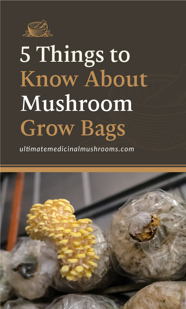 """Text area which says """"5 Things to Know About Mushroom Grow Bags, ultimatemedicinalmushrooms.com"""" followed by mushroom grow bags placed indoors"""