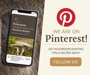 Find Us on Pinterest | Ultimate Medicinal Mushrooms