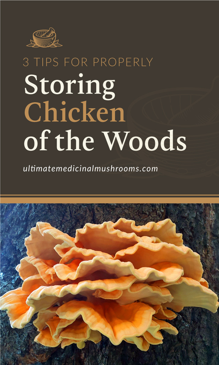 """Text area which says """"3 Tips For Properly Storing Chicken of The Woods, ultimatemedicinalmushrooms.com"""" followed by an orange chicken of the woods mushroom in the forest"""