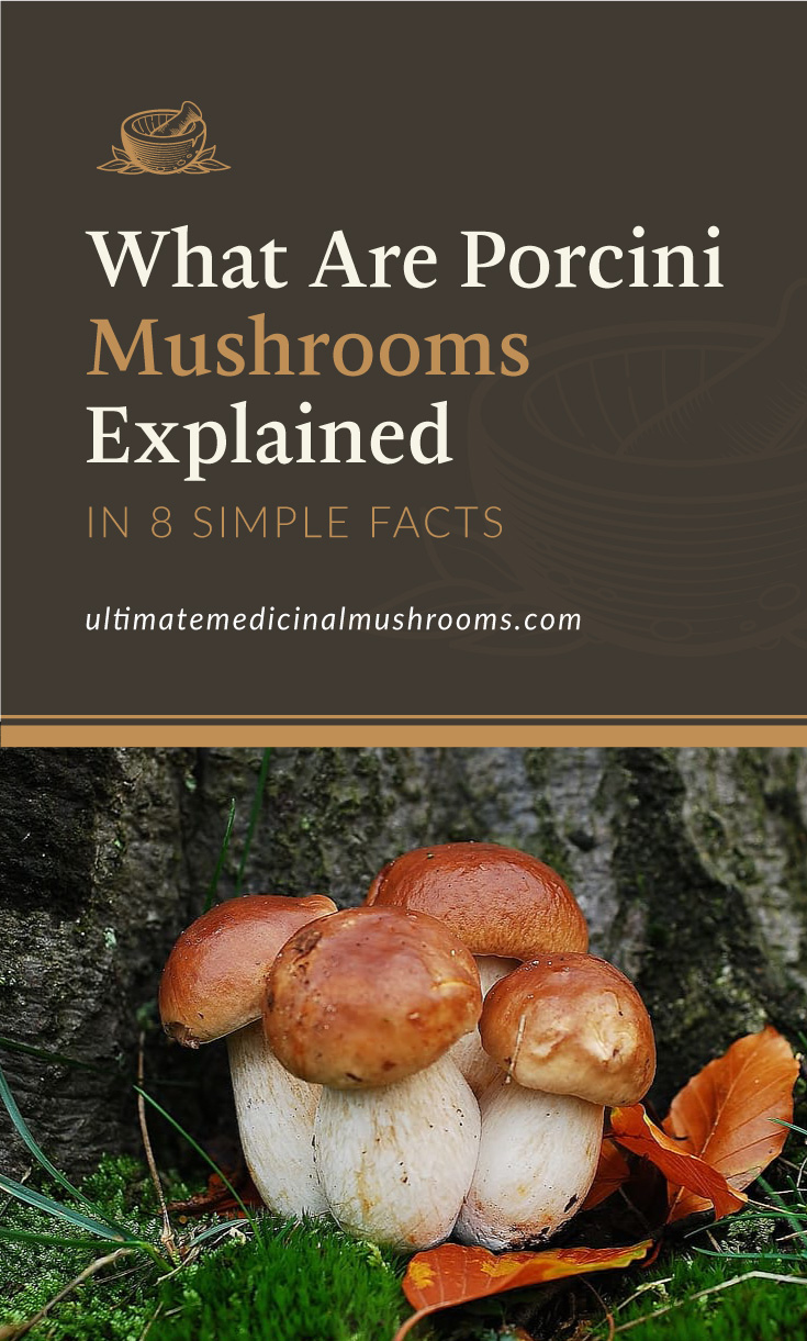 """Text area which says """"What Are Porcini Mushrooms Explained In 8 Simple Facts ultimatemedicinalmushrooms.com"""" followed by a photo of porcini mushrooms growing from the forest grounds"""