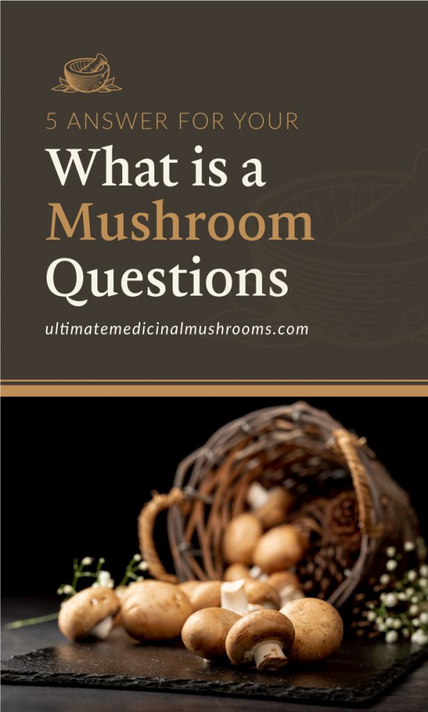 """Text area which says """"5 Answers for Your What is a Mushroom Questions, ultimatemedicinalmushrooms.com"""" followed by a mushrooms on a black stone plate with a brown knitted basket"""