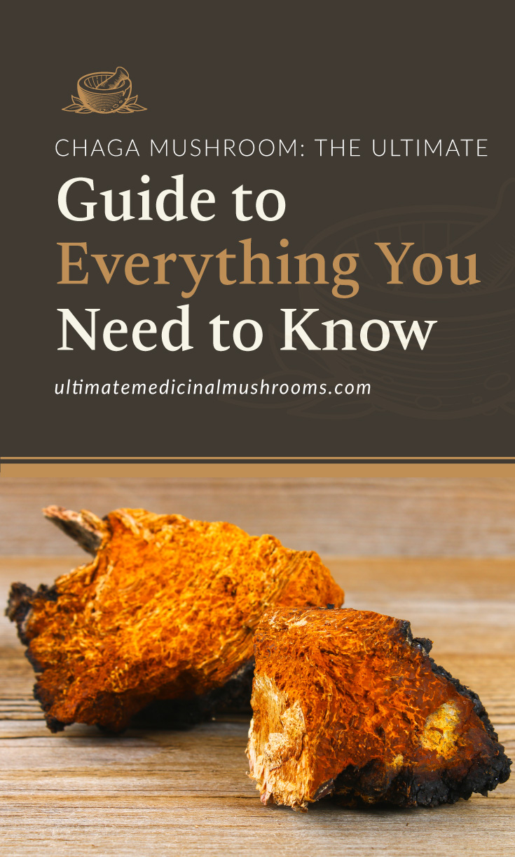 """Text area which says """"Chaga Mushroom – The Ultimate Guide to Everything You Need to Know ,ultimatemedicinalmushrooms.com"""" followed by a photo of dried chaga mushroom in a wooden background"""
