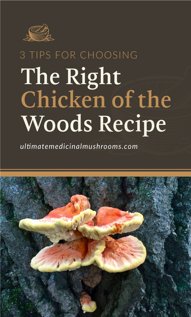 """Text area which says """"3 Tips For Choosing The Right Chicken of The Woods Recipe, ultimatemedicinalmushrooms.com"""" followed by chicken of the woods mushroom growing out of a tree trunk"""