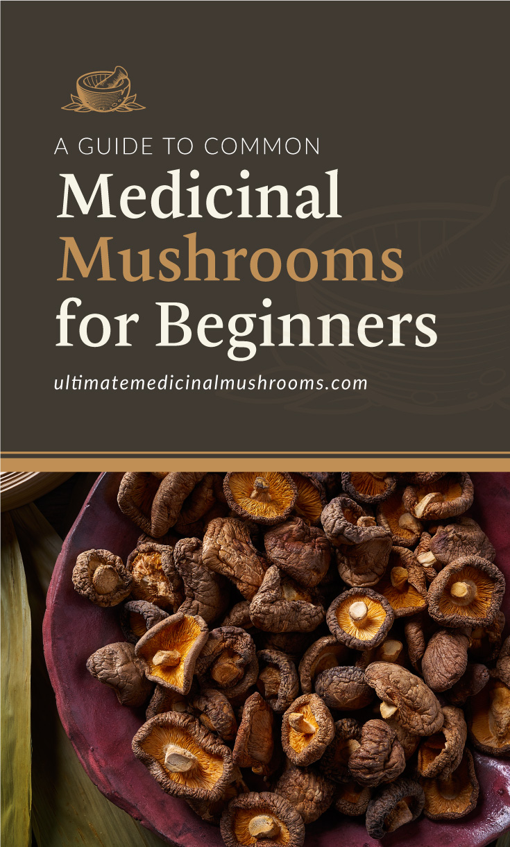 """Text area which says """"A Guide to Common Medicinal Mushrooms for Beginners, ultimatemedicinalmushrooms.com"""" followed by a photo of a purple plate holding a bunch of dried shiitake mushrooms"""