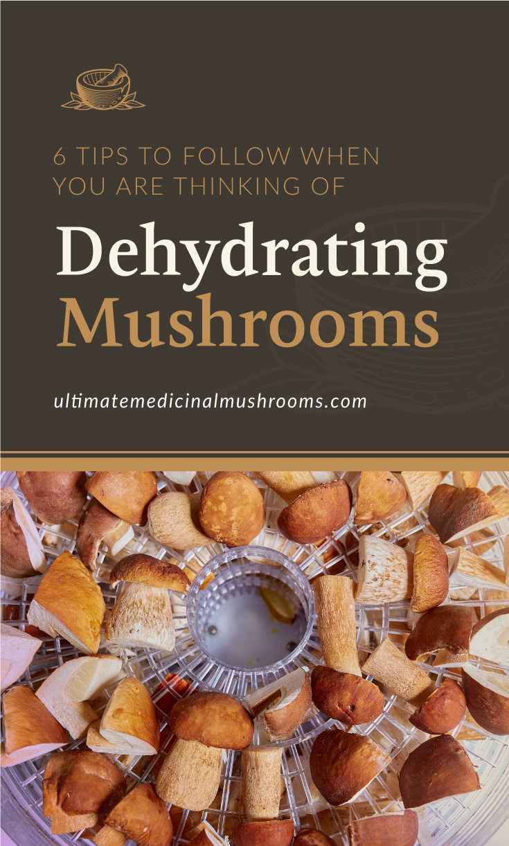 """Text area which says """"6 Tips To Follow When You Are Thinking Of Dehydrating Mushrooms, ultimatemedicinalmushrooms.com"""" followed by sliced porcini mushrooms arranged neatly on a dehydrator"""