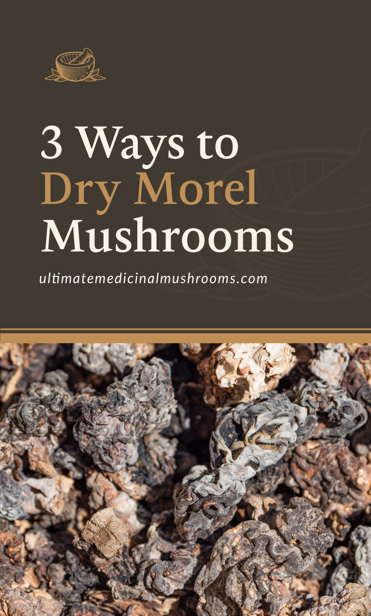 """Text area which says """"3 Ways to Dry Morel Mushrooms, ultimatemedicinalmushrooms.com"""" followed by a photo of a cluster of dry morel mushrooms"""