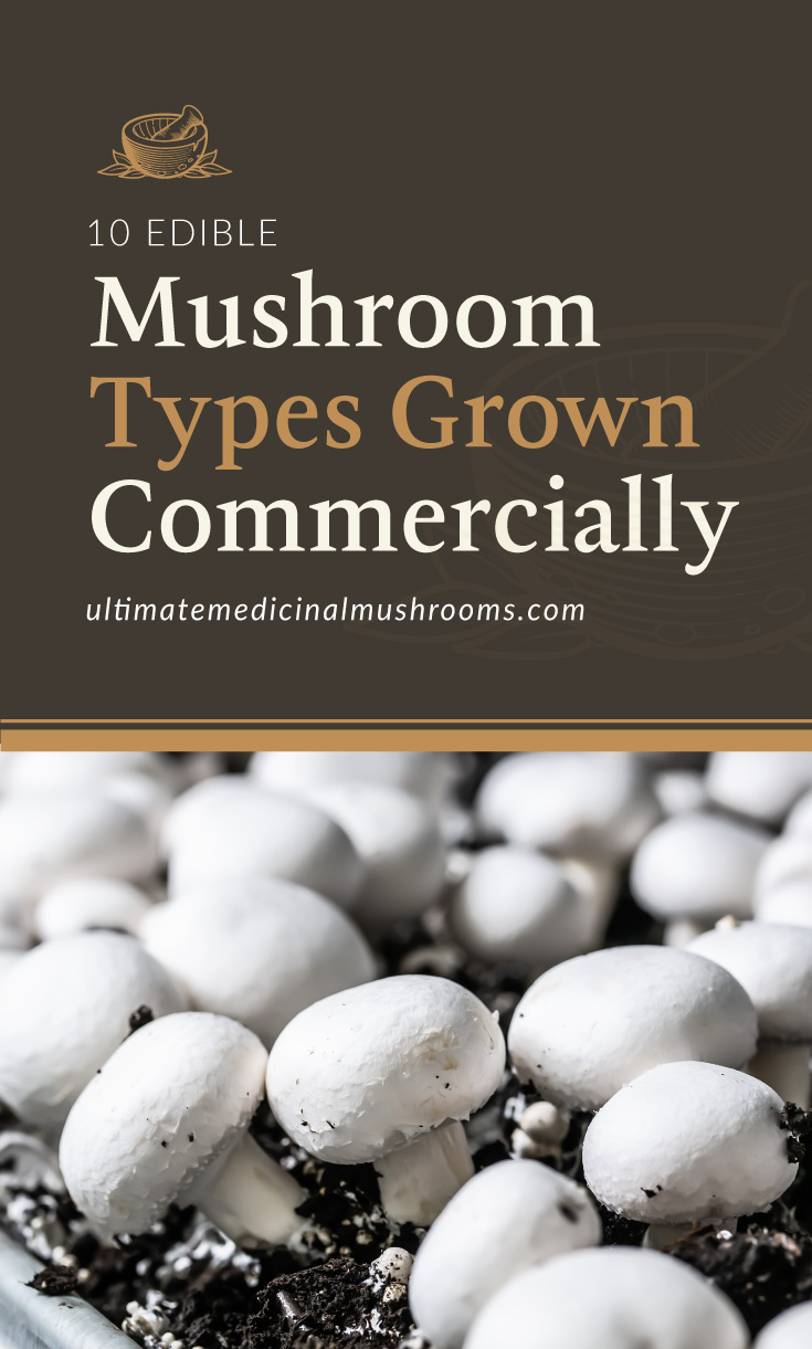 """Text area which says """"10 Edible Mushroom Types Grown Commercially, ultimatemedicinalmushrooms.com"""" followed by a photo of a cluster of stark white mushrooms"""