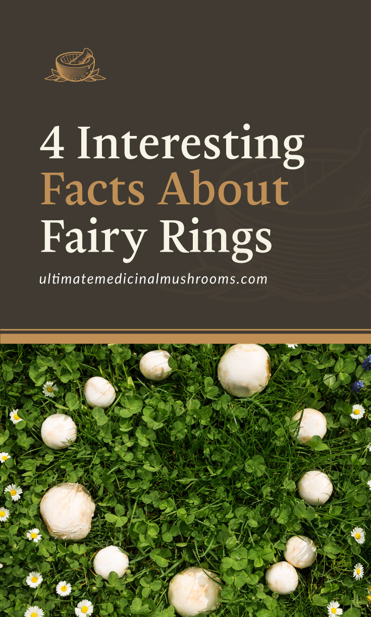 """Text area which says """"4 Interesting Facts About Fairy Rings , ultimatemedicinalmushrooms.com"""" followed by a photo of a fairy ring surrounded by flowers"""