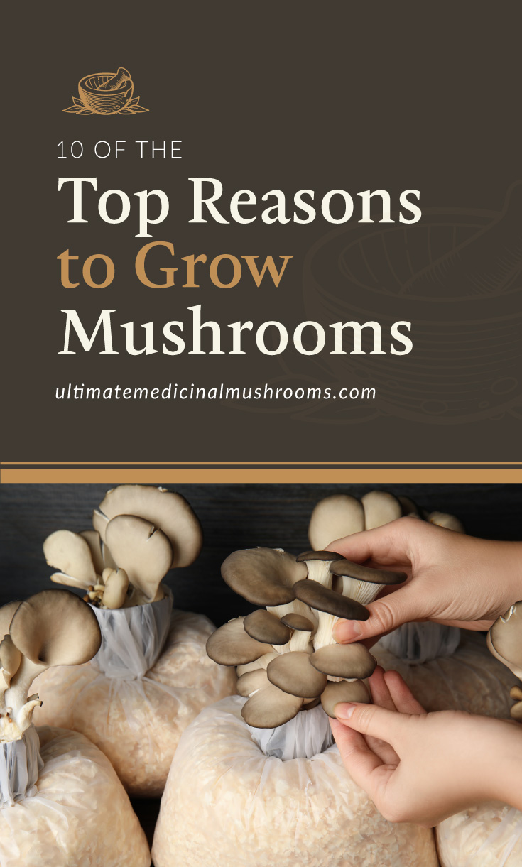 """Text area which says """"10 of the Top Reasons to Grow Mushrooms, ultimatemedicinalmushrooms.com"""" followed by a photo of a person touching a cluster of mushrooms"""