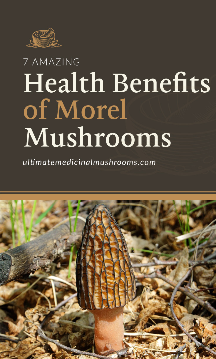 """Text area which says """"7 Amazing Health Benefits of Morel Mushrooms , ultimatemedicinalmushrooms.com"""" followed by a photo of a morel mushroom growing on the forest grounds"""