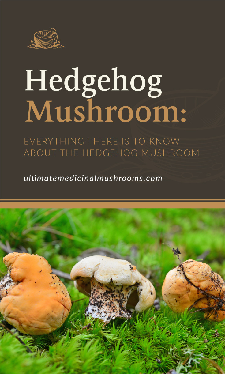 """Text area which says """"Hedgehog Mushroom: Everything There Is To Know About The Hedgehog Mushroom, ultimatemedicinalmushrooms.com"""" followed by three headgehog mushrooms growing in the forest"""