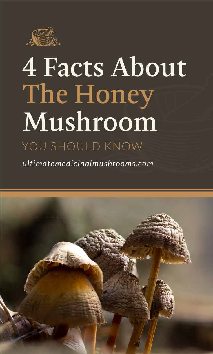 """Text area which says """"4 Facts About the Honey Mushroom You Should Know, ultimatemedicinalmushrooms.com"""" followed by a close up galerina marginata, a deadly poisonous mushroom."""