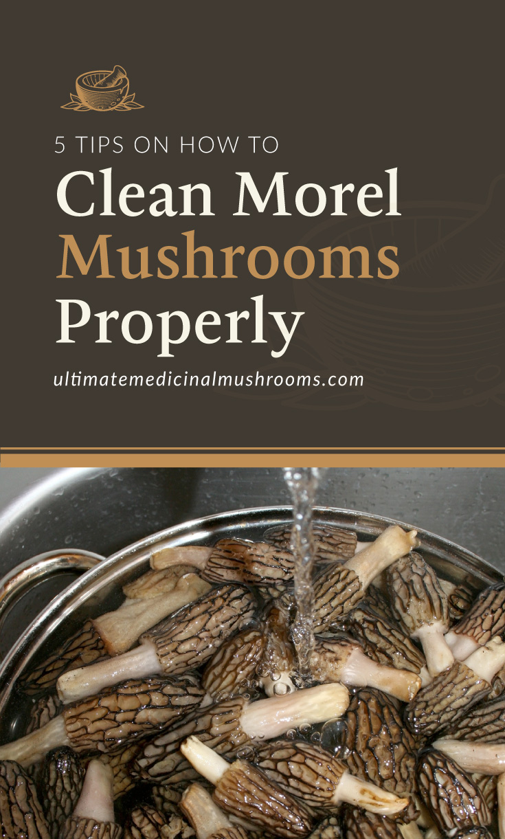 """Text area which says """"5 Tips on How to Clean Morel Mushrooms Properly, ultimatemedicinalmushrooms.com"""" followed by a photo of morel mushrooms being washed in the sink"""