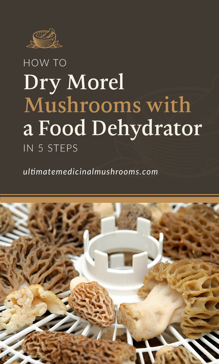 """Text area which says """"How to Dry Morel Mushrooms with a Food Dehydrator in 5 Steps , ultimatemedicinalmushrooms.com"""" followed by a photo of morel mushrooms on a food dehydrator"""
