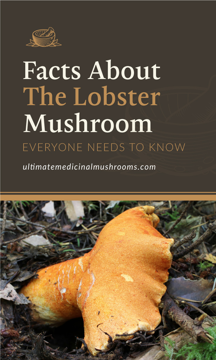 """Text area which says """"Facts About The Lobster Mushroom Everyone Needs To Know, ultimatemedicinalmushrooms.com"""" followed by an orange lobster mushroom in the forest"""