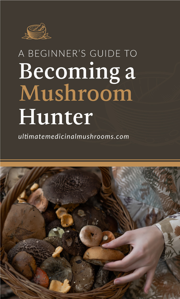 """Text area which says """"A Beginner's Guide to Becoming A Mushroom Hunter, ultimatemedicinalmushrooms.com"""" followed by a photo of a woman clutching a basket full of wild mushrooms"""