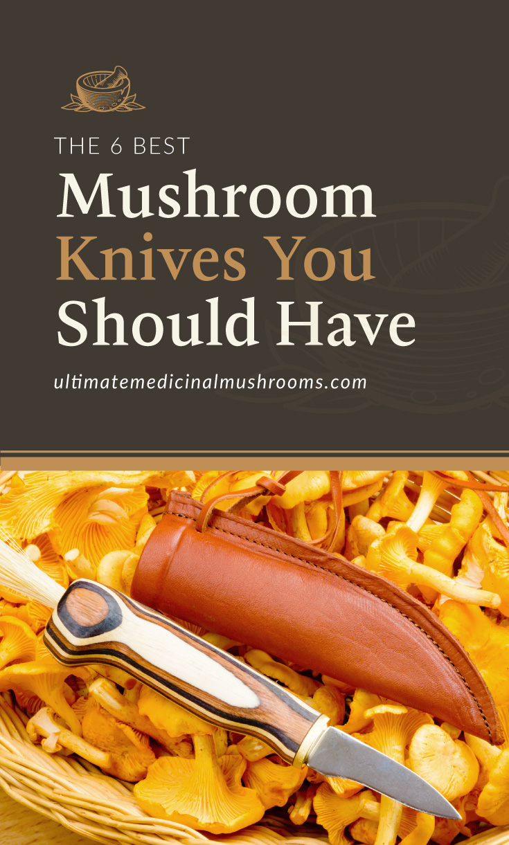 """Text area which says """"The 6 Best Mushroom Knives You Should Have, ultimatemedicinalmushrooms.com"""" followed by a photo of mushrooms and a knife"""