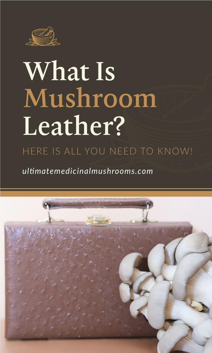 """Text area which says """"What Is Mushroom Leather? Here Is All You Need To Know!, ultimatemedicinalmushrooms.com"""" followed by a bunch of mushrooms with a handbag made of mushroom leather behind it"""