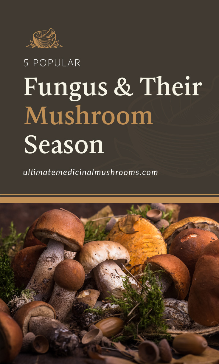 """Text area which says """"5 Popular Fungus and Their Mushroom Season, ultimatemedicinalmushrooms.com"""" followed by a photo of a cluster of various mushrooms"""
