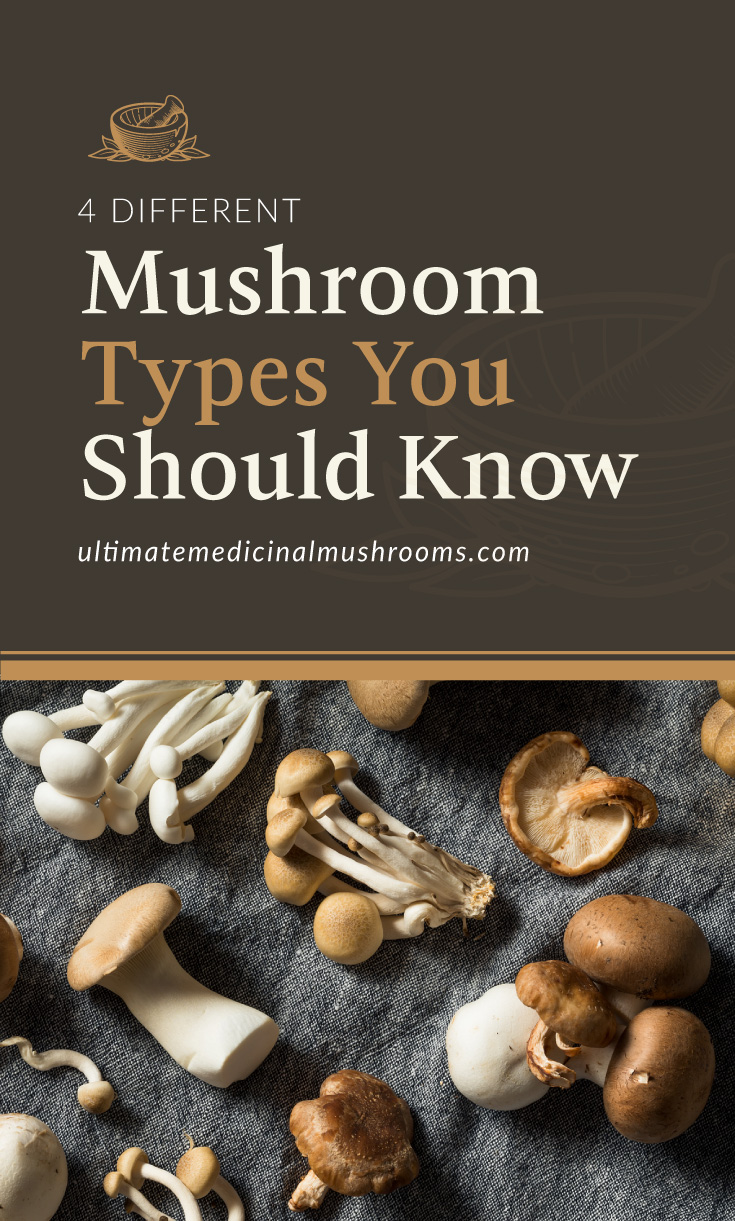 """Text area which says """"4 Different Mushroom Types You Should Know ,ultimatemedicinalmushrooms.com"""" followed by a photo of an assortment of wild mushrooms laid on a gray cloth"""