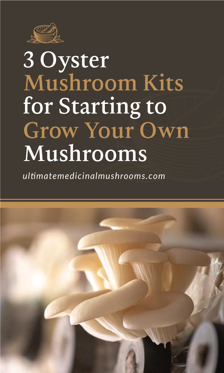 """Text area which says """"3 Oyster Mushroom Kits for Starting to Grow Your Own Mushrooms, ultimatemedicinalmushrooms.com"""" followed by a photo of oyster mushroom growing from a mini-farm"""