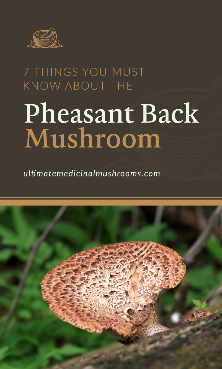 """Text area which says """"7 Things You Must Know About The Pheasant Back Mushroom, ultimatemedicinalmushrooms.com"""" followed by a pheasant back mushroom growing from a dead log"""