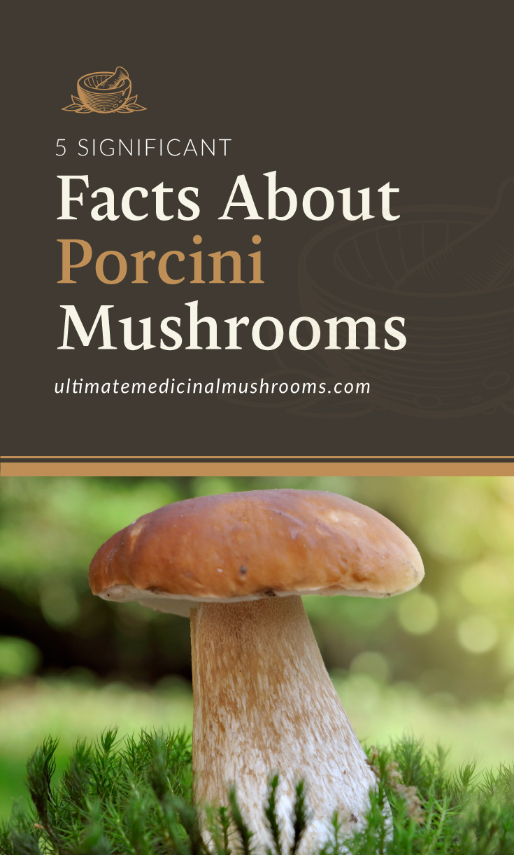 """Text area which says """"5 Significant Facts About Porcini Mushrooms, ultimatemedicinalmushrooms.com"""" followed by a photo of a porcini mushroom on the grass"""