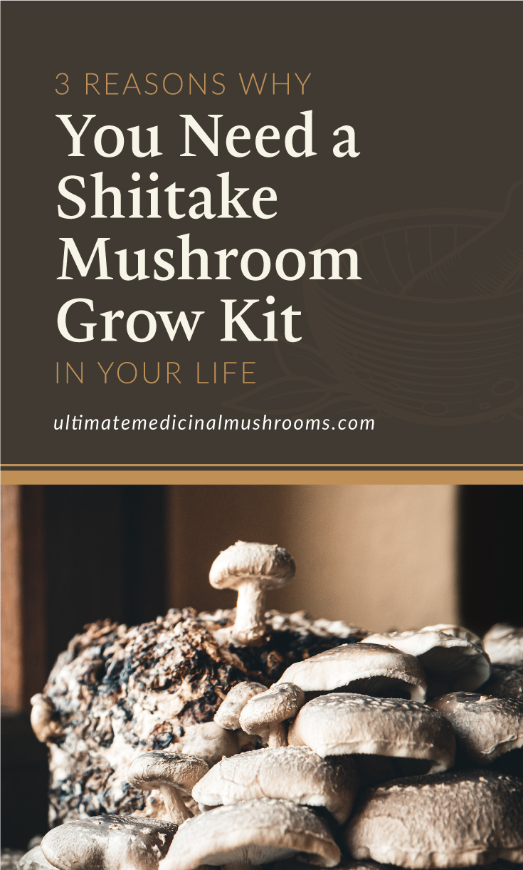 """Text area which says """"3 Reasons You Need a Shiitake Mushroom Grow Kit in Your Life , ultimatemedicinalmushrooms.com"""" followed by a photo of a shiitake mushroom growing kit placed on a window sill"""