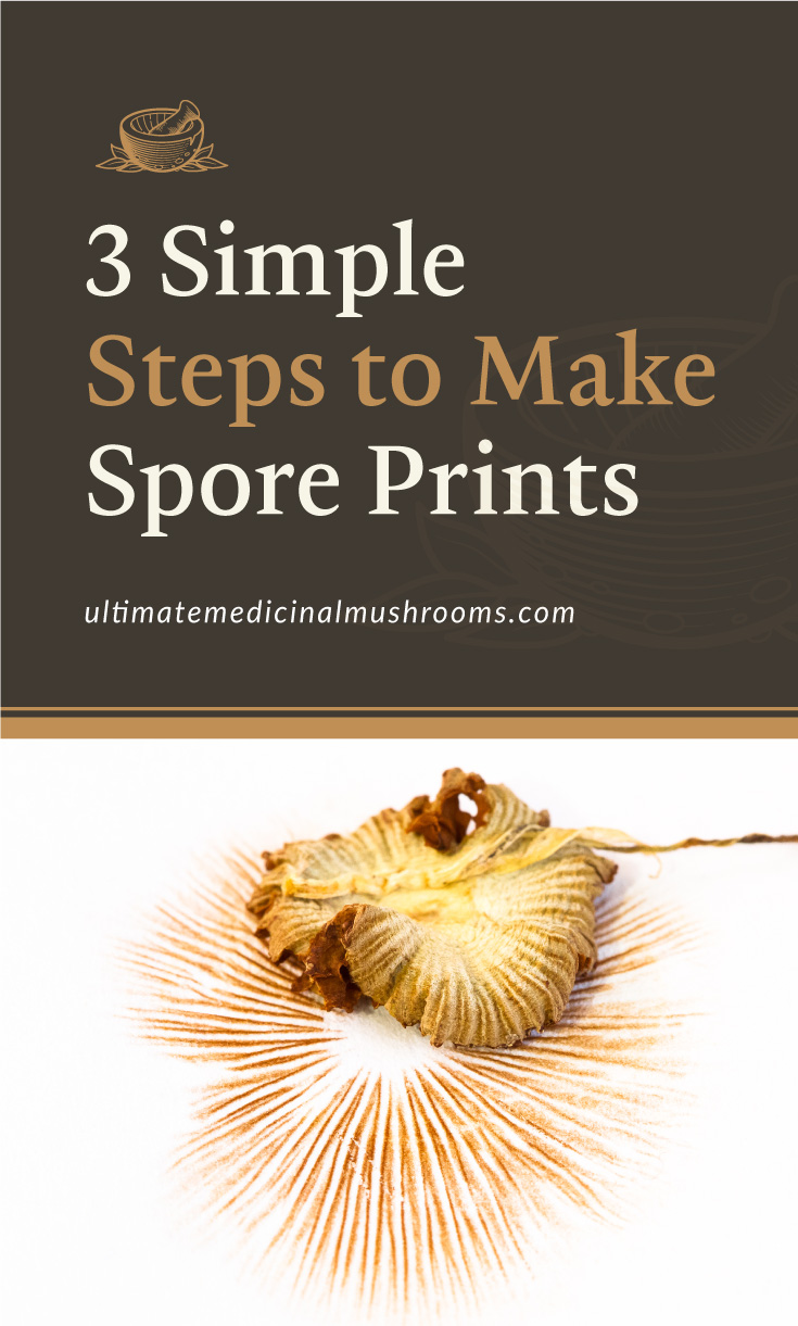 """Text area which says """"3 Simple Steps to Make Spore Prints , ultimatemedicinalmushrooms.com"""" followed by a photo of mushroom on top of its spore print"""