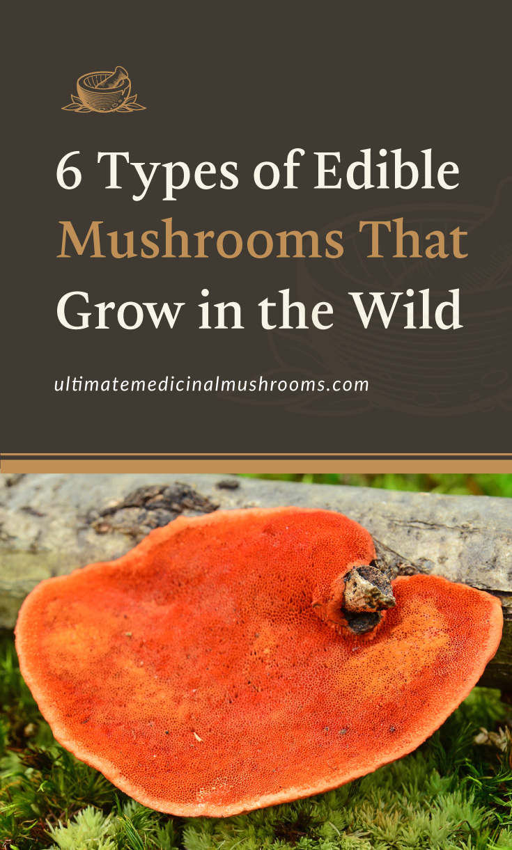 """Text area which says """"6 Types of Edible Mushrooms That Grow in the Wild, ultimatemedicinalmushrooms.com"""" followed by a photo of an cinnabar mushroom growing from a piece of wood"""