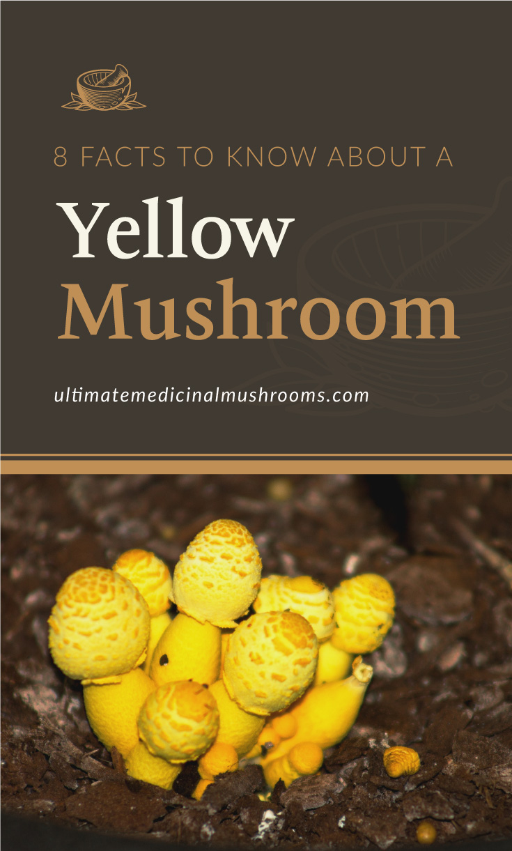 """Text area which says """"8 Facts To Know About A Yellow Mushroom, ultimatemedicinalmushrooms.com"""" followed by yellow mushrooms on the ground"""