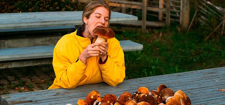 5 Benefits of Eating Mushrooms | ultimatemedicinalmushrooms.com