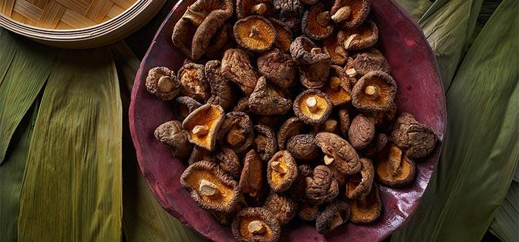 A Guide to Common Medicinal Mushrooms for Beginners | ultimatemedicinalmushrooms.com