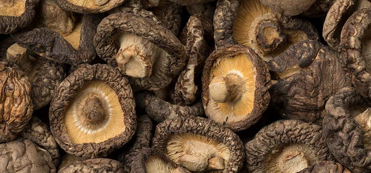 All You Need to Know About Dried Shiitake Mushrooms   ultimatemedicinalmushrooms.com